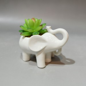 Succulents in Ceramic Elephant
