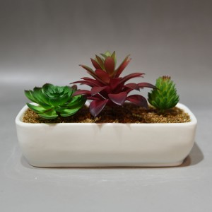 Succulents In Ceramic Pot – White