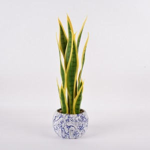 ceramic pot dracaena variegated yucca ornamental for indoor decoration